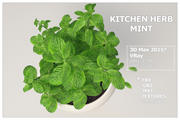 Kitchen Herb MINT 3d model