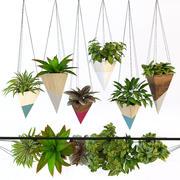Wiszące rośliny 1 3d model