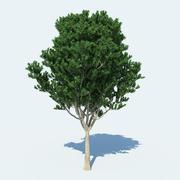 Träd v1 3d model