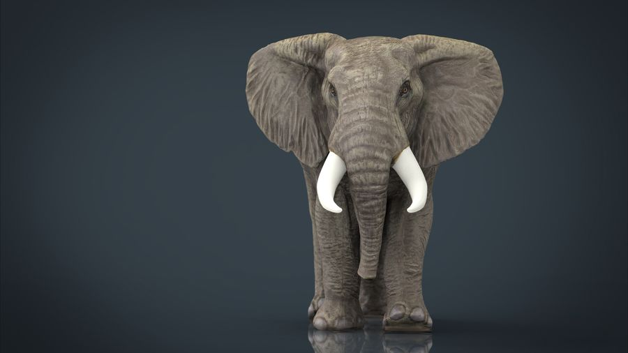 Afrikansk elefant royalty-free 3d model - Preview no. 2