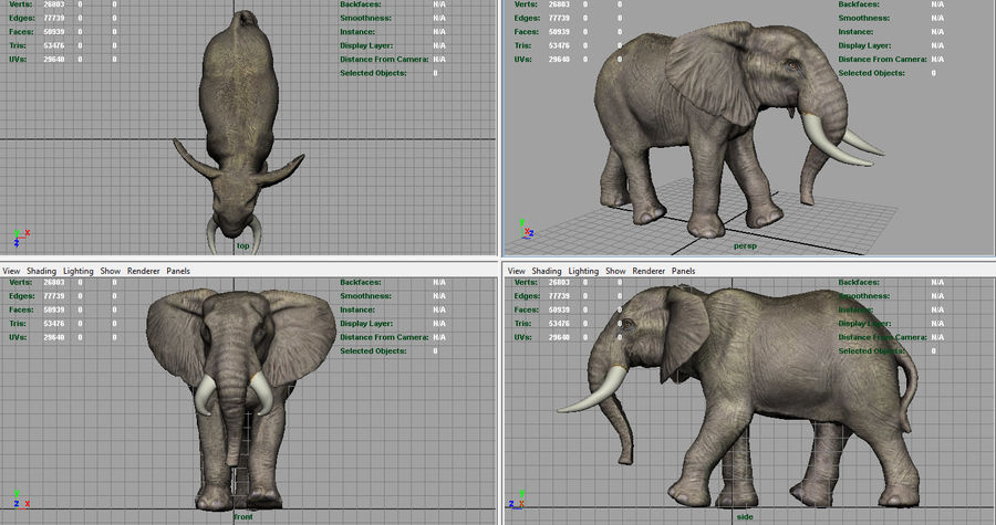 African Elephant royalty-free 3d model - Preview no. 9