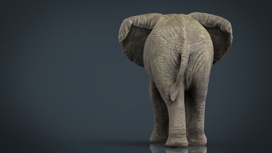 Afrikansk elefant royalty-free 3d model - Preview no. 3