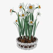 Narciso 3d model