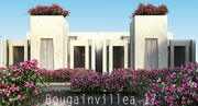 Bougainvillea 17 3d model