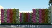 Бугенвиллия 20 3d model