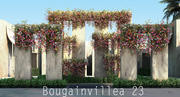 Бугенвиллия 23 3d model