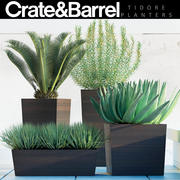 植物82 3d model
