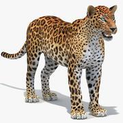 Sri Lankan Leopard 3d model