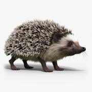 Hedgehog(FUR) 3d model