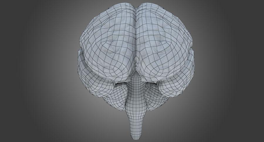 İnsan beyni royalty-free 3d model - Preview no. 13