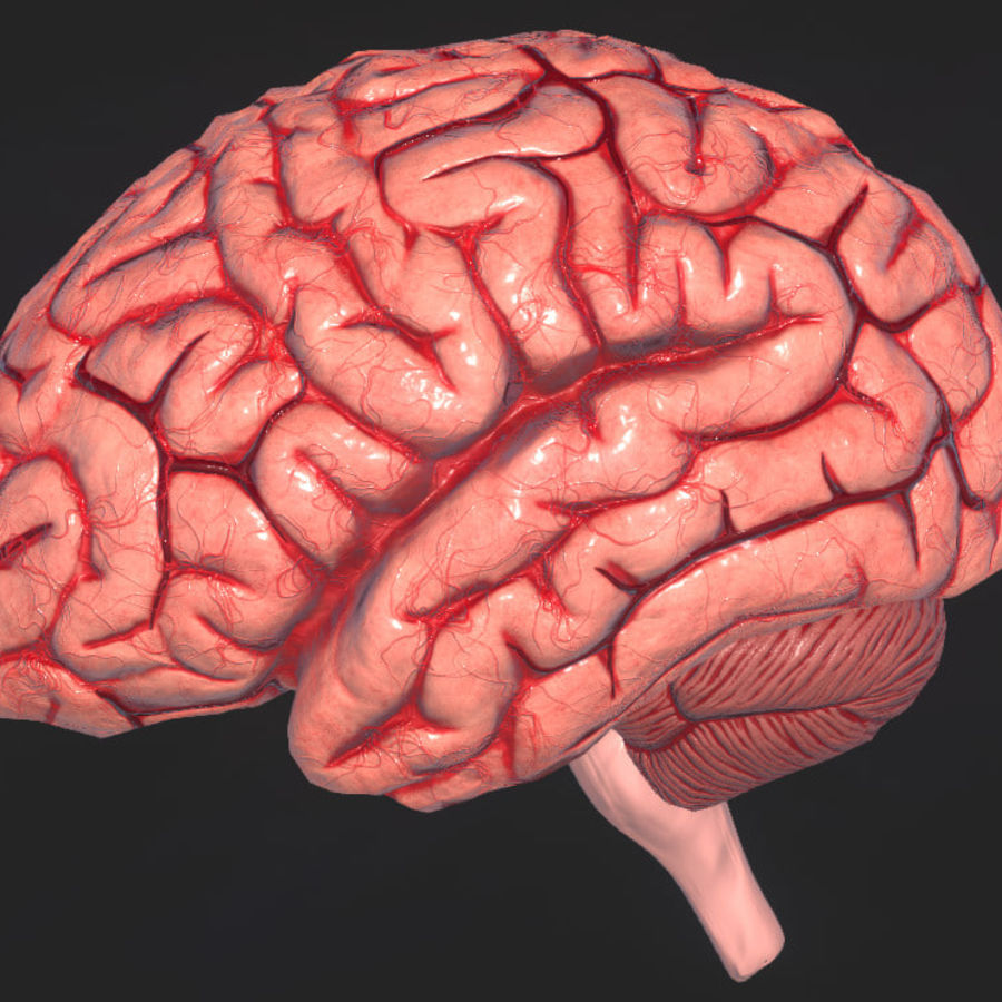 Human Brain 3d Model 10 X Obj Free3d