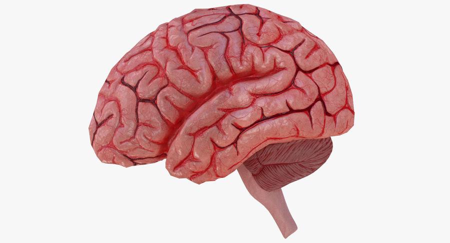 İnsan beyni royalty-free 3d model - Preview no. 3