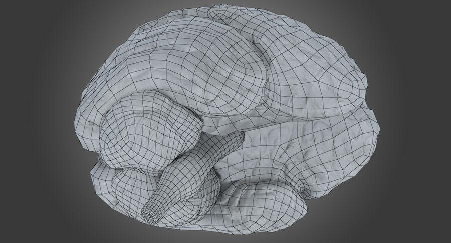 İnsan beyni royalty-free 3d model - Preview no. 10