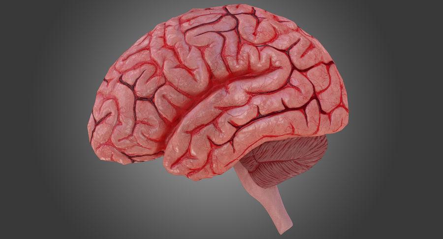 İnsan beyni royalty-free 3d model - Preview no. 4