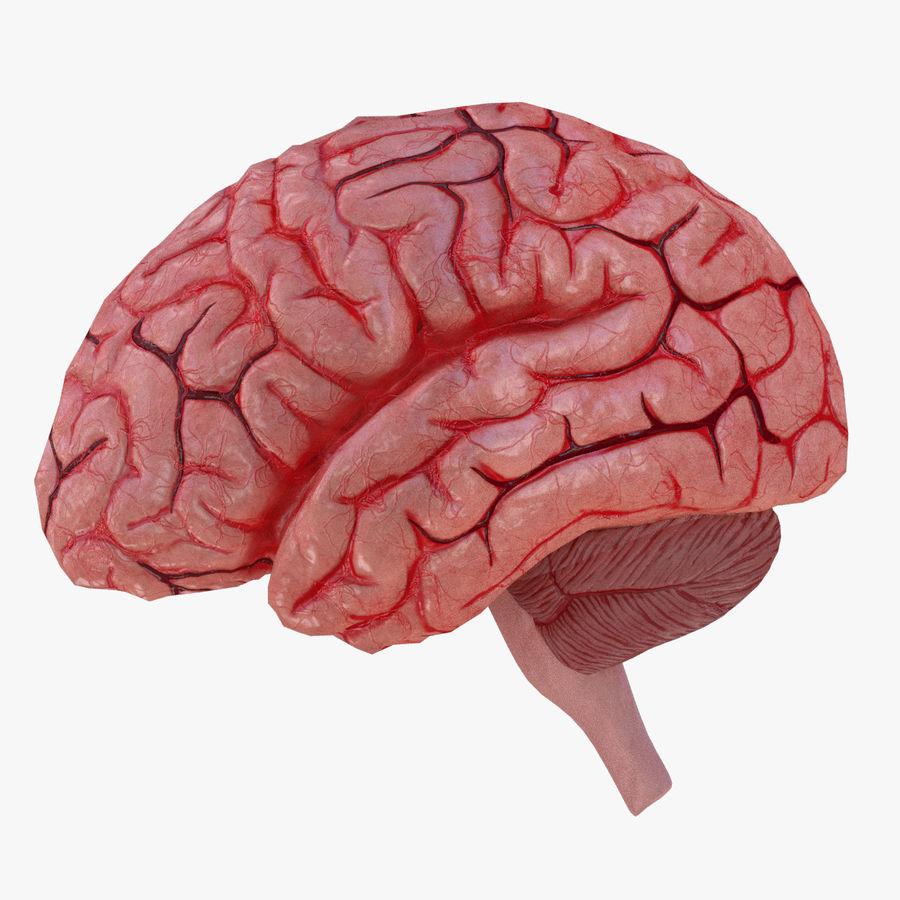 Human Brain 3D Model $10 - .max .obj - Free3D
