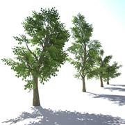 Niedrige Poly Tree Collection 3d model