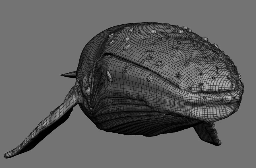 Humpback Whale royalty-free 3d model - Preview no. 13