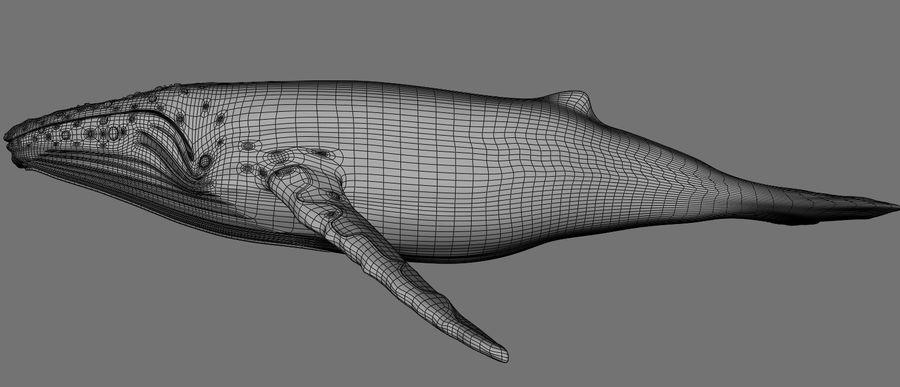 Kambur balina royalty-free 3d model - Preview no. 11