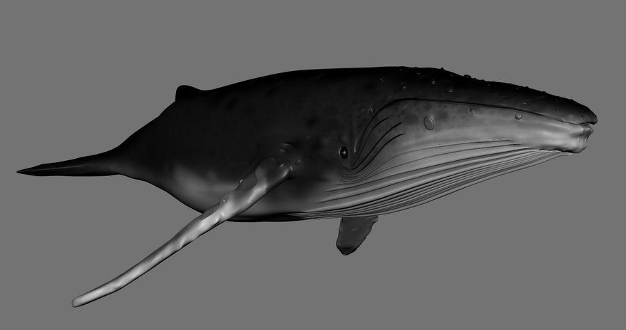 Kambur balina royalty-free 3d model - Preview no. 8