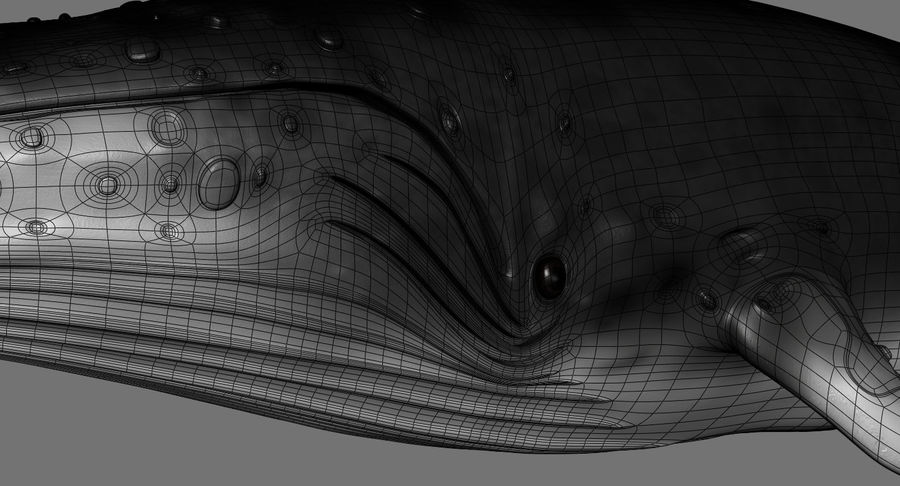 Humpback Whale royalty-free 3d model - Preview no. 15