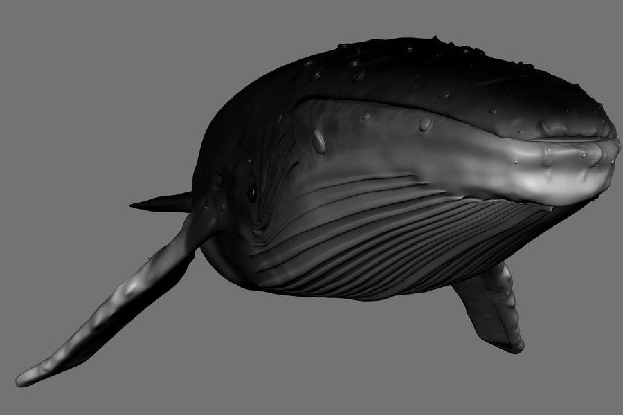 Kambur balina royalty-free 3d model - Preview no. 7
