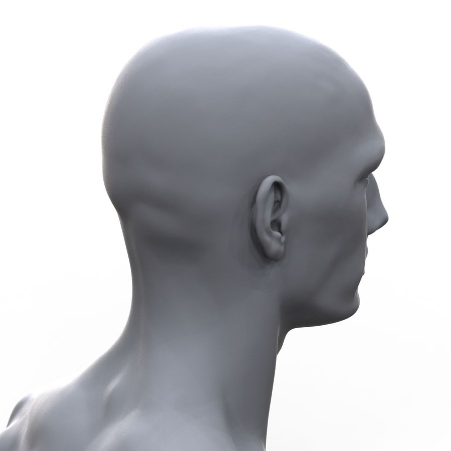 hayvanca royalty-free 3d model - Preview no. 16