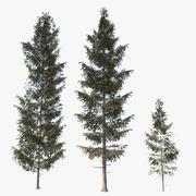 Świerkowe drzewa gotowe do gry 3d model