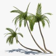 Coconut Palms Set 02 3d model