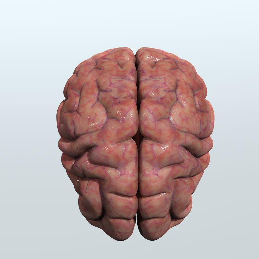 Realistic Human Brain Anatomy 3D Model $49 - .oth .obj .ma .max .fbx ...