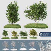 Broadleaf 10 Bushes (+GrowFX) 3d model
