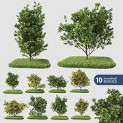 Broadleaf 10 Bushes 3d model