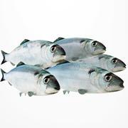鲱鱼 3d model
