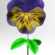 viola tricolor 3d model