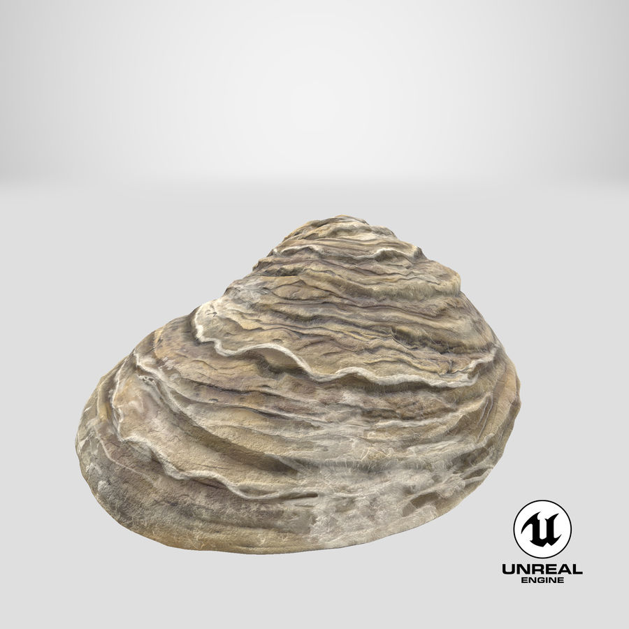 Oyster Shell 01 royalty-free 3d model - Preview no. 25