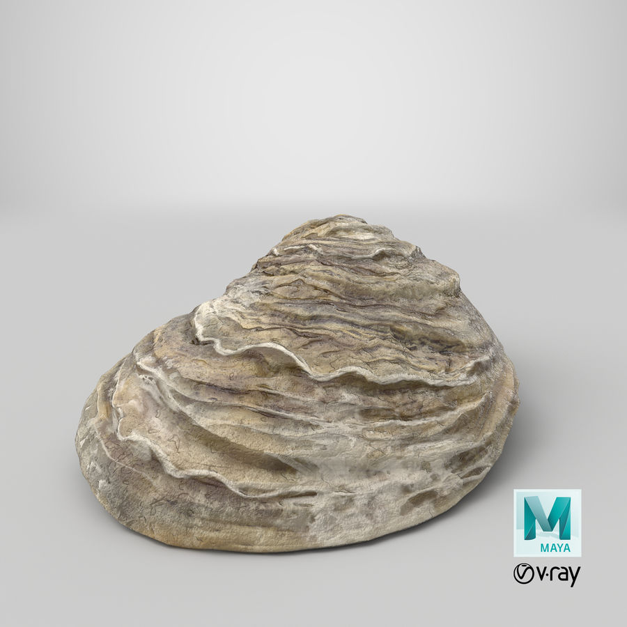 Oyster Shell 01 royalty-free 3d model - Preview no. 20