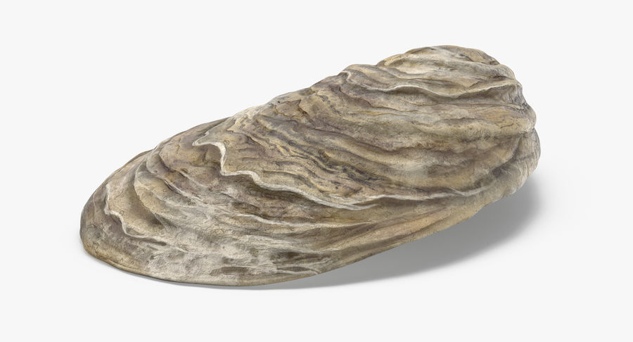 Oyster Shell 01 royalty-free 3d model - Preview no. 8