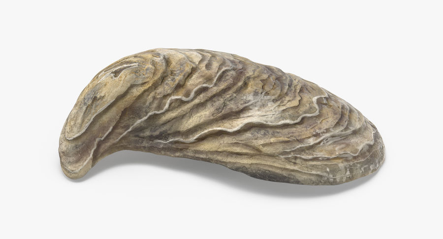 Oyster Shell 01 royalty-free 3d model - Preview no. 6