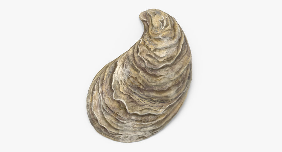 Oyster Shell 01 royalty-free 3d model - Preview no. 3