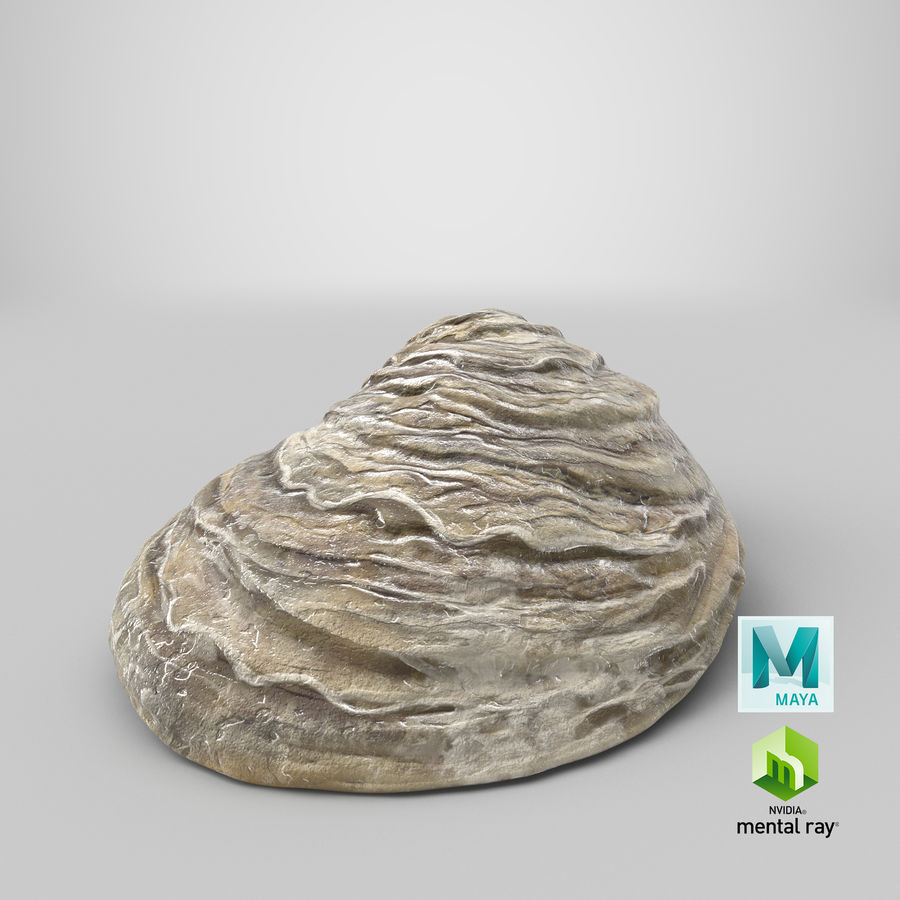 Oyster Shell 01 royalty-free 3d model - Preview no. 21