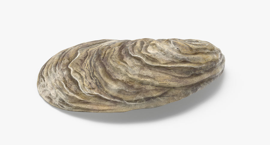 Oyster Shell 01 royalty-free 3d model - Preview no. 4