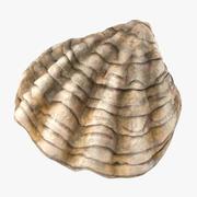 牡蛎壳02 3d model