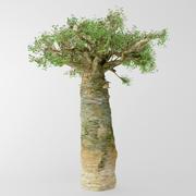 Madagascan baobab 3d model