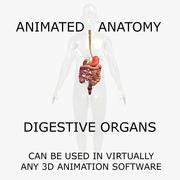3D модель анатомии человека: анимированные органы пищеварения и тела 3d model