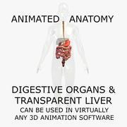 3D人体解剖模型:动画消化器官和透明肝器官 3d model