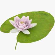 Animowana lilia wodna 3d model