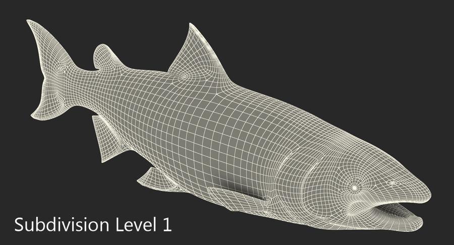 Pesce Salmone Atlantico royalty-free 3d model - Preview no. 14