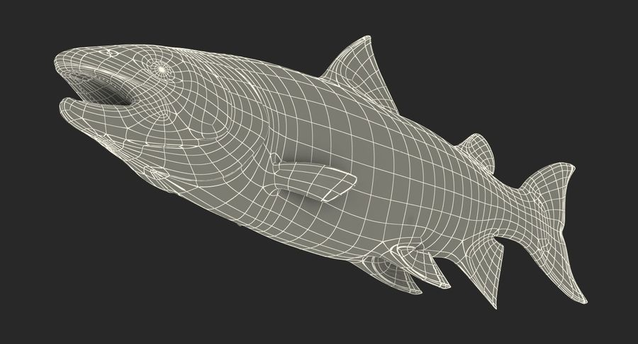 Atlantik Somon Balığı royalty-free 3d model - Preview no. 21