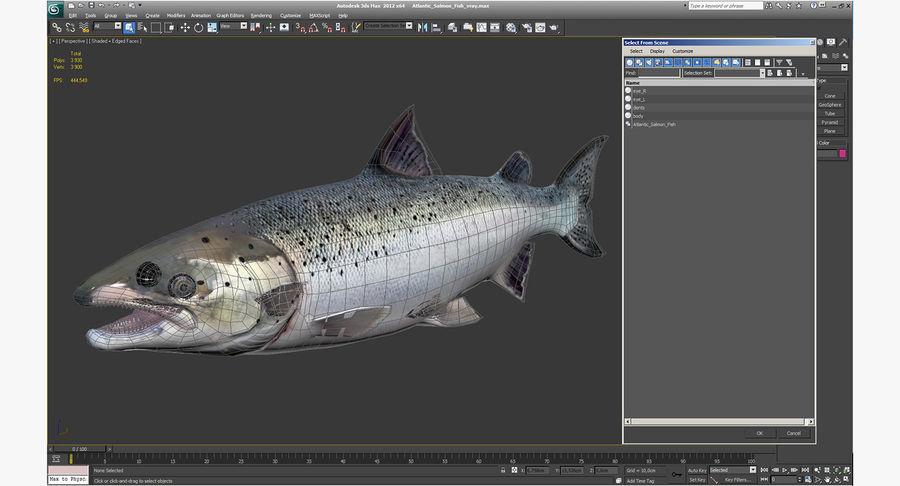 Atlantic Salmon Fish royalty-free 3d model - Preview no. 17