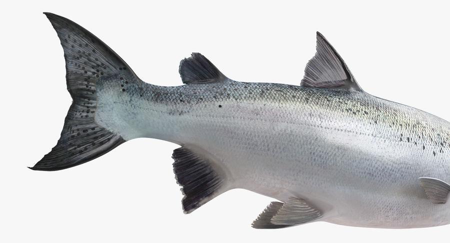 Pesce Salmone Atlantico royalty-free 3d model - Preview no. 12