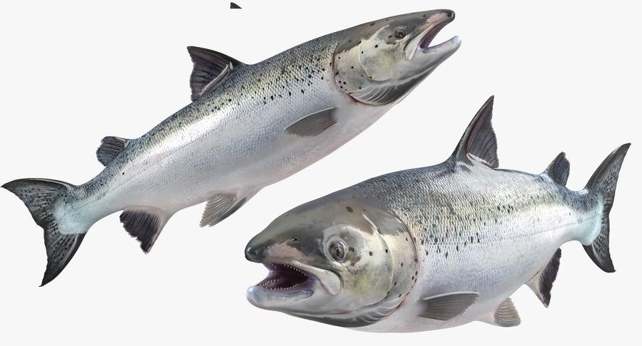 Pesce Salmone Atlantico royalty-free 3d model - Preview no. 9